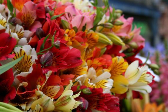 http://reve-de-photo.cowblog.fr/images/IMG7692.jpg